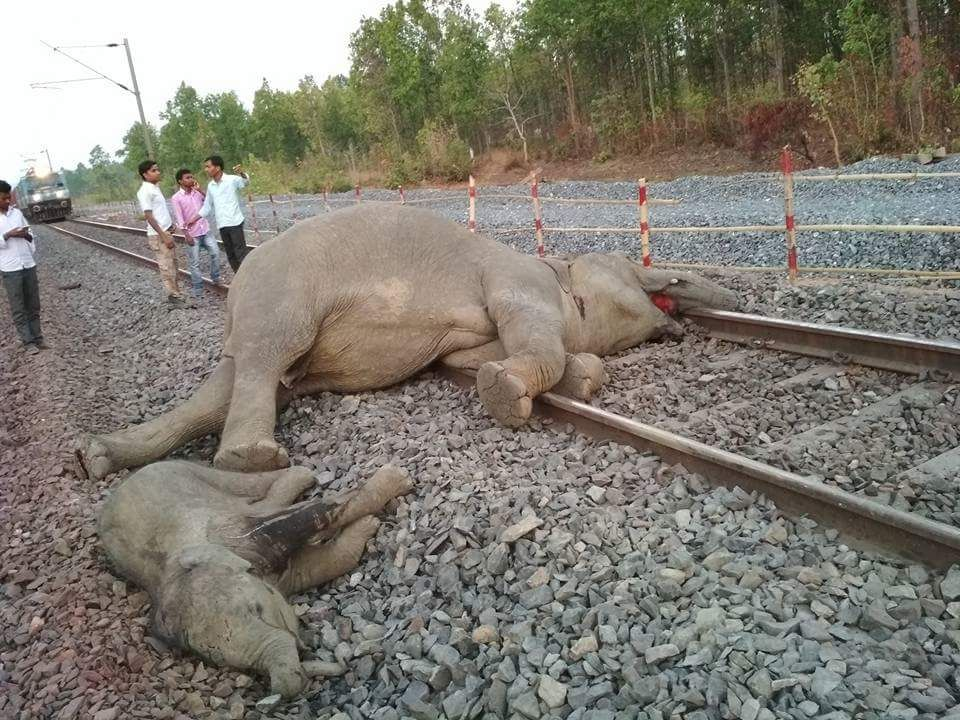 Four jumbos run over by train in Odisha's Jharsuguda