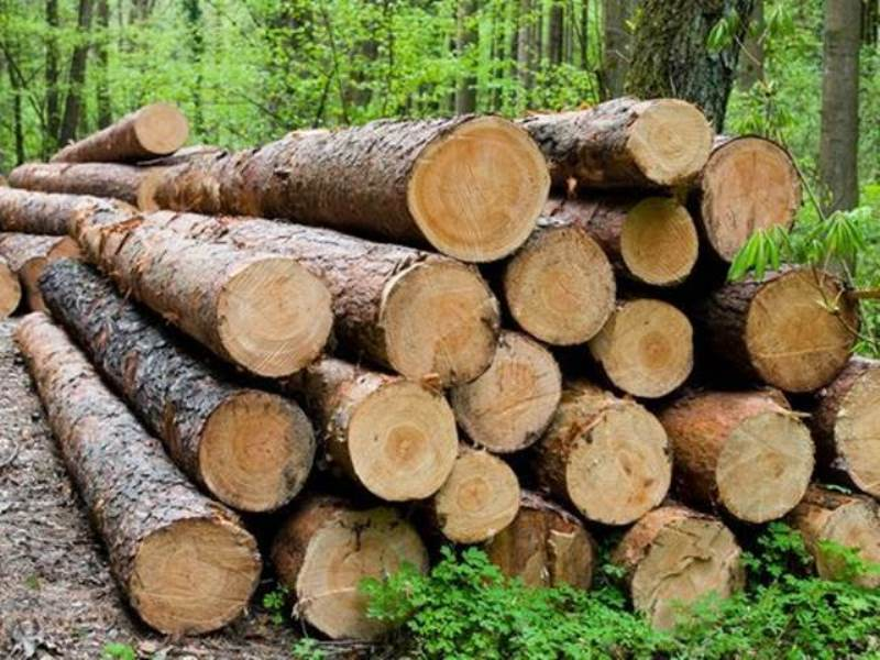 Illegal saw mill raided in Sambalpur, huge cache of wood