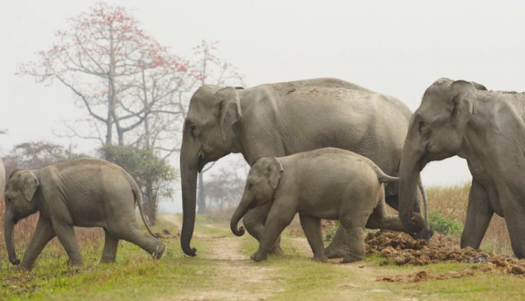 Elephant protects little girl from its own herd