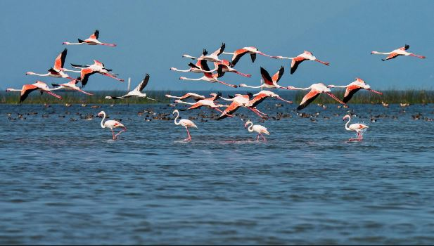 Odisha Govt Approves Rs 158 Crore For Development Of Chilika Lake