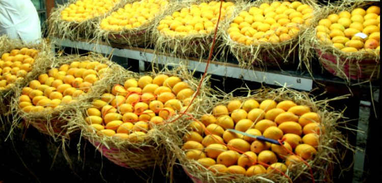 State level mango exhibition to begin from June 1 in bhubaneswar