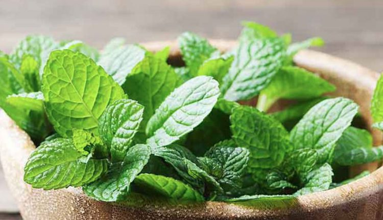 Lesser-Known Uses Of Mint For Skin Care. Read On