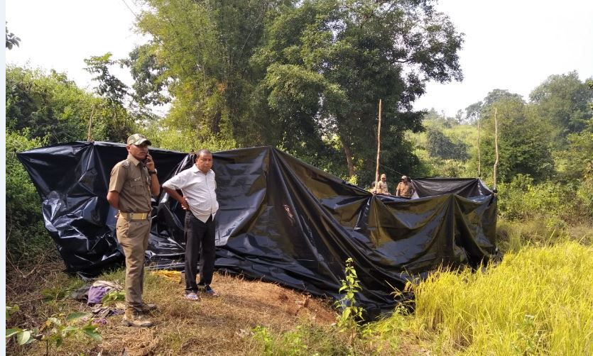 elephant electrocuted in Angul