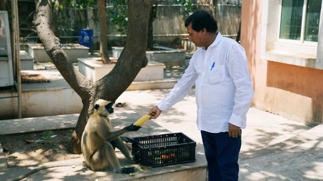Achyuta Samanta distributes food to animals