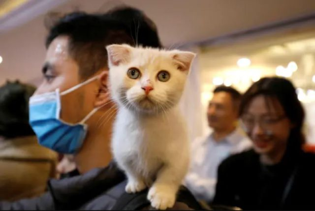 antiviral drug for cats helps fight covid