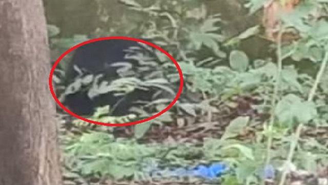 Bear In School Premises;Foresters At High Alert In Odisha's Nabarangpur
