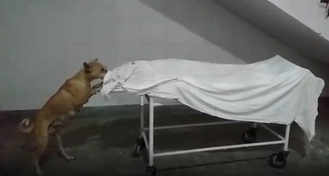 stray dog nibbles dead body