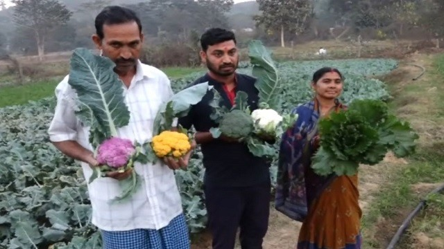 Man Adopts Idea From Internet To Cultivate Colorful Cauliflower In Odisha