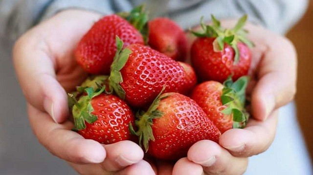 strawberry cultivation in jhansi