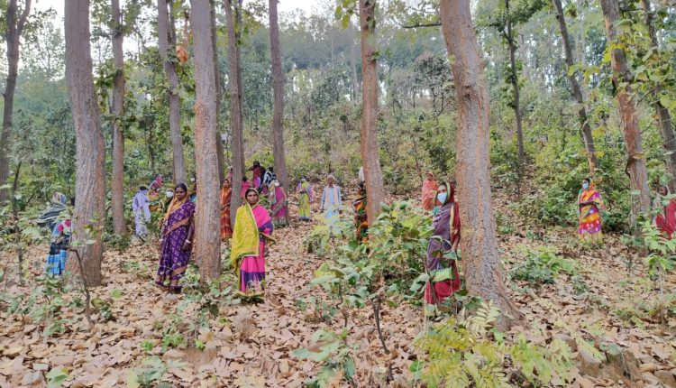 women and forest conservation