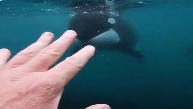 man face to face with whale