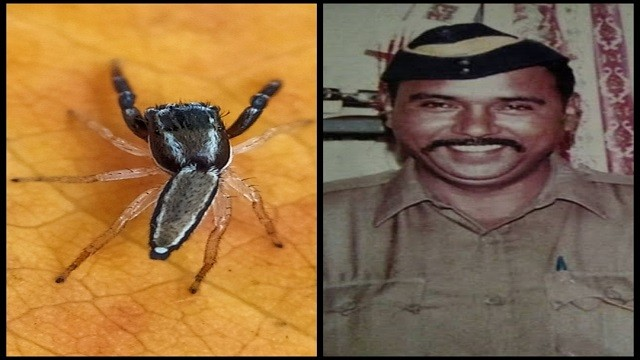 New spider species named after 26/11 martyr who caught Kasab