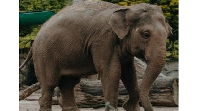 up student killed by elephant